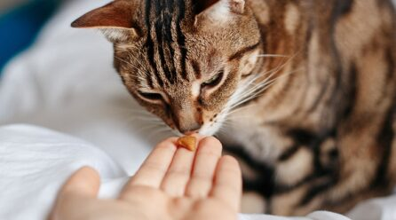 Best Reasons to Give Your Cat Vitamins Supplement